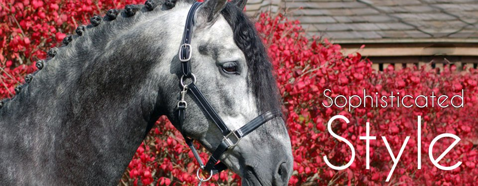 header-tina-bridle3