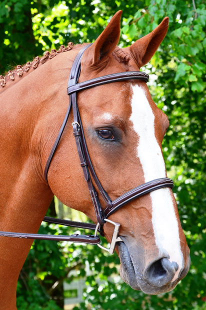 aster-bridle