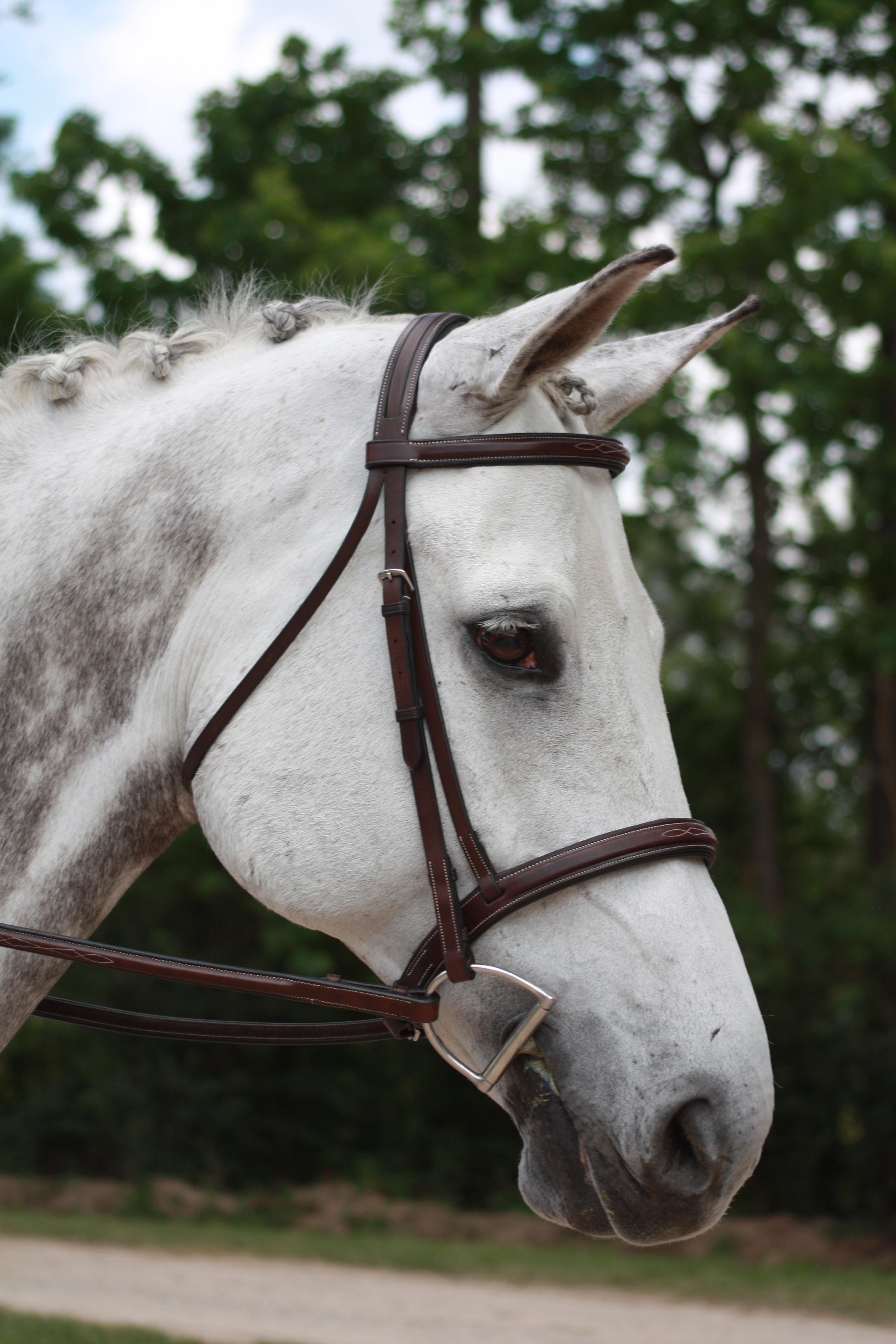 Middleburg Hunter Bridle_6768