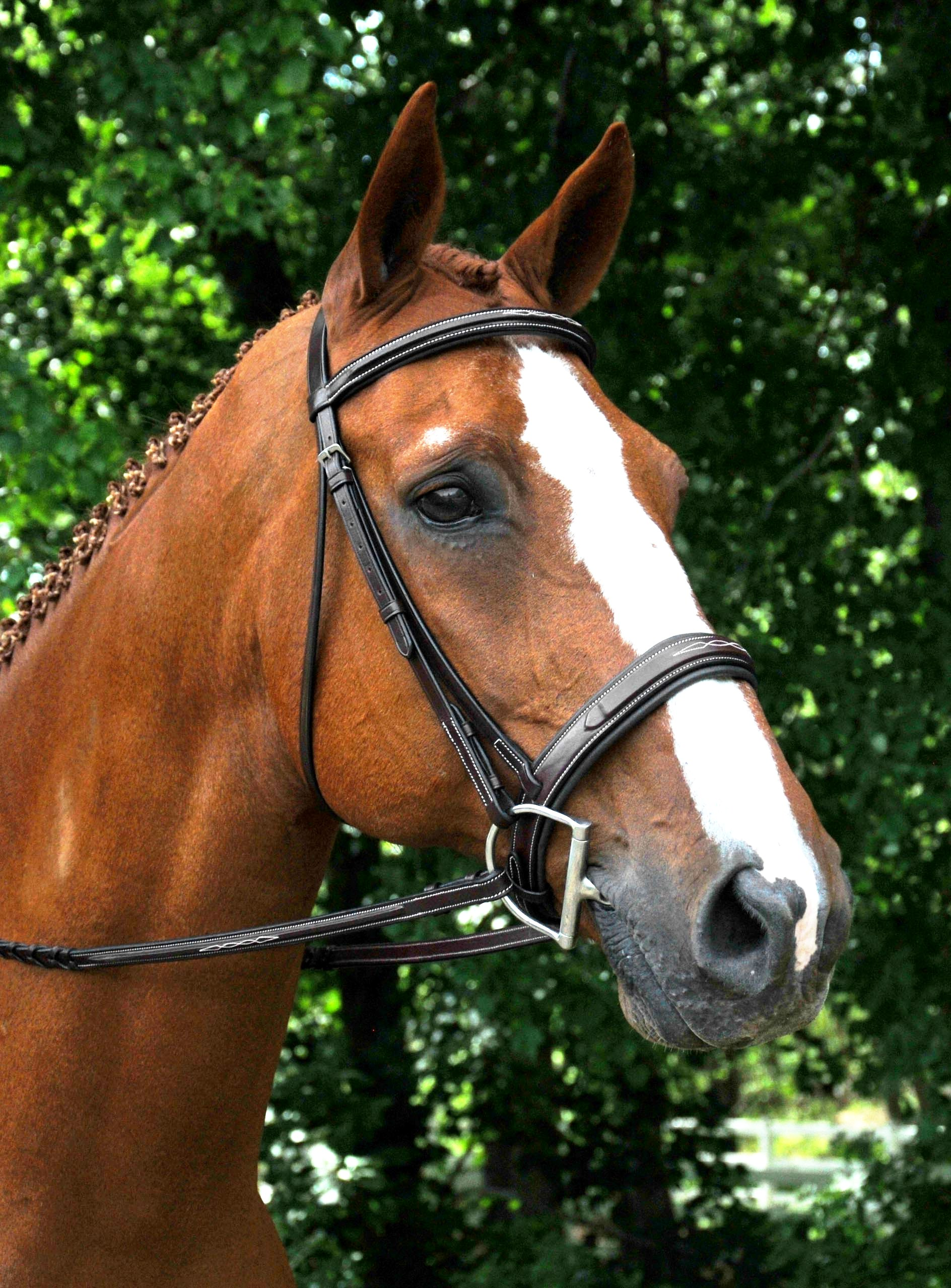 Details about  /NEW High Quality Dark Brown White Padded English Dressage Drop Noseband Caveson
