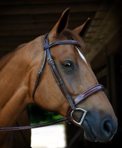 Unique Brown Padded Plaited Anatomical Comfort Hunter Bridle Pony Size